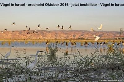 Auf 180 Seiten zeigt Fotograf Thomas Krumenacker die Schönheit Israels und Biodiversität.