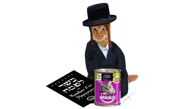 Koschere Katzen? Nur in Israel