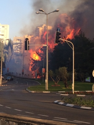 Das Feuer wütete besonders im Karmel Gebirge und in der Hafenstadt Haifa (Bild: Lior Rosenthal)
